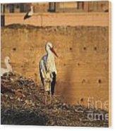 Storks In Marrakech Wood Print
