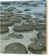Stromatolites Wood Print by Georgette Douwma