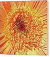 6190-007 Wood Print