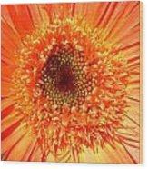 6190 Wood Print