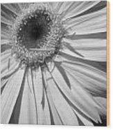 6204 Wood Print