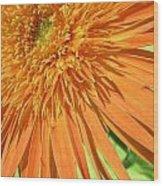 6224-1 Wood Print