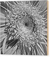 63321c1 Wood Print