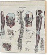 Anatomie Methodique Illustrations Wood Print
