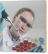 Biological Research Wood Print by Tek Image