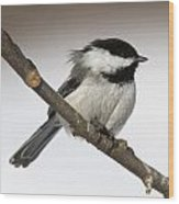 Blackcapped Chickadee Wood Print