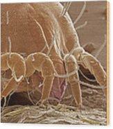 Dust Mite Wood Print