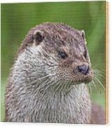 European Otter Wood Print