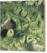 Hard Coral Wood Print