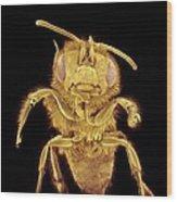 Honey Bee, Sem Wood Print