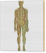 Human Anatomy, Artwork Wood Print
