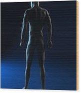 Male Anatomy, Artwork Wood Print