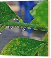 Raindrops On Leaf Wood Print