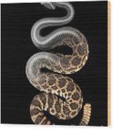 Southern Pacific Rattlesnake X-ray Wood Print