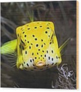Yellow Boxfish Wood Print