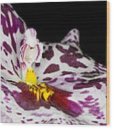 Exotic Orchids Of C Ribet Wood Print