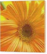 7321-007 Wood Print