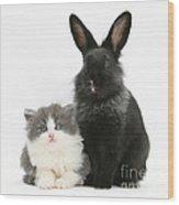 Kitten And Rabbit Wood Print