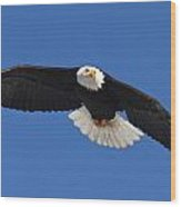 Alaska Bald Eagle Wood Print