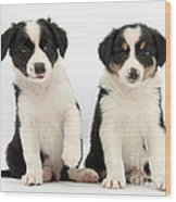 Border Collie Puppies Wood Print