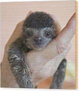 Brown-throated Three-toed Sloth Wood Print