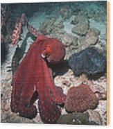 Day Octopus Wood Print