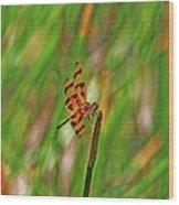 8- Dragonfly Wood Print
