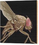 Fly, Sem Wood Print