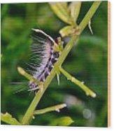 Hairy Caterpillar Wood Print