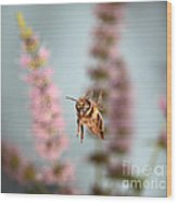Honey Bee In Flight Wood Print
