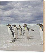 King Penguin Aptenodytes Patagonicus Wood Print