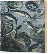 Verne: 20,000 Leagues Wood Print
