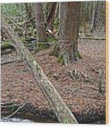 Willow Pond B And B Wood Print