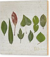 9 Leaves Wood Print