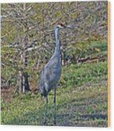 9- Sandhill Crane Wood Print