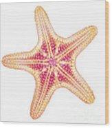 X-ray Of Starfish Wood Print