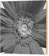 93573a3 Wood Print