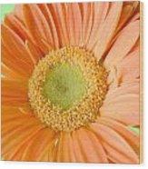 93721a1 Wood Print