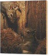 A A Baby Eastern Gray Squirrel Sciurus Wood Print