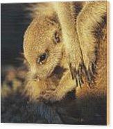 A Baby Meerkat Snuggles Wood Print