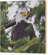 A Bald Eagle Wood Print