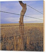 A Barbed Wire Fence Stretches Wood Print by Gordon Wiltsie