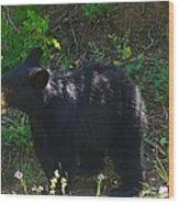 A Bear Cub Wood Print