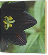A Beautiful Fritillaria Camschatcensis Wood Print