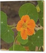 A Beautiful Orange Trumpet Shaped Flower With Green Leaves Wood Print