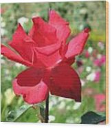 A Beautiful Red Flower Growing At Home Wood Print