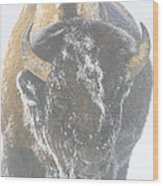 A Bison Covered By Ice And Fog Wood Print