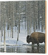 A Bison Stands In A Cold  Stream Wood Print