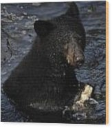 A Black Bear Feeds On Salmon In Anan Wood Print by Melissa Farlow