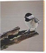 A Black-capped Chickadee Wood Print